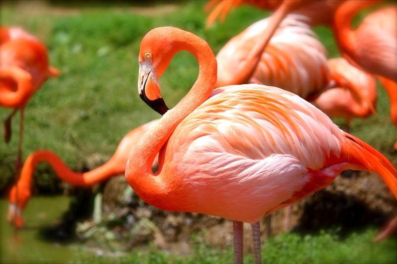 51+  Gambar Burung Cendrawasih Terbagus  Paling Unik Free