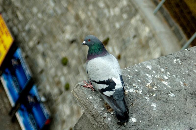 Hati-Hati dengan Kotoran Burung, Kesehatan Keluarga Taruhannya
