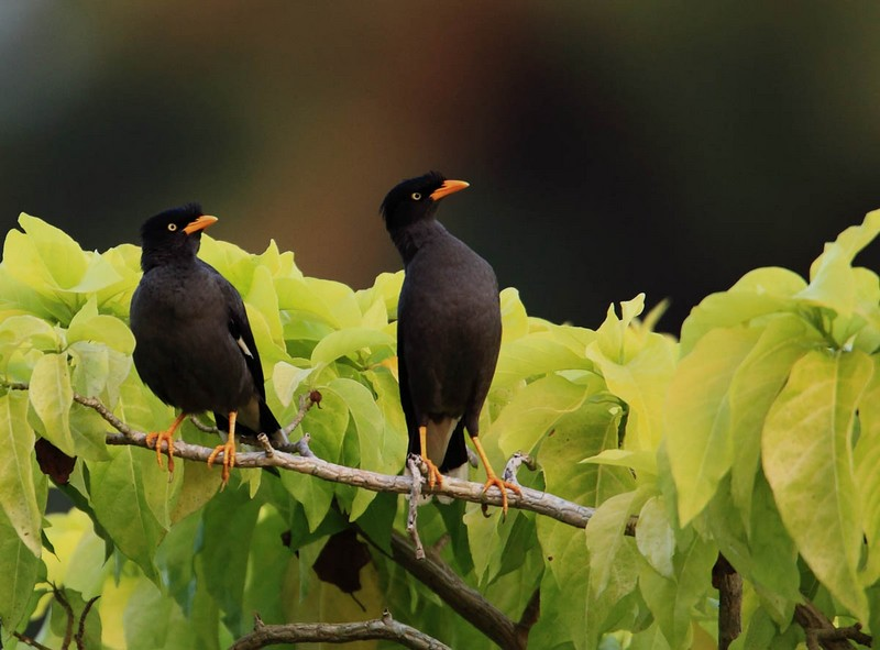 Kamus Burung