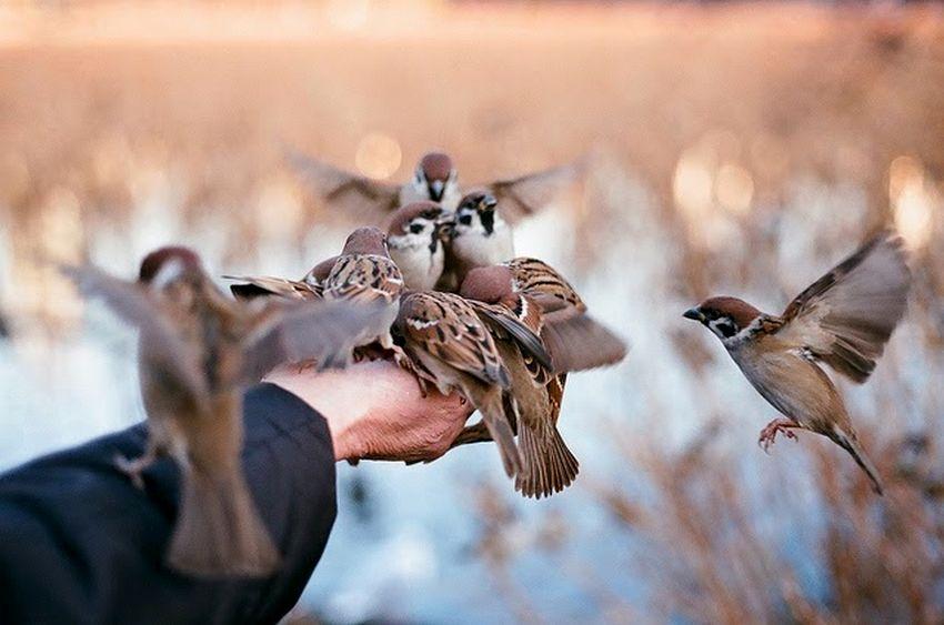 Burung Jinak (shootingfilm.net)