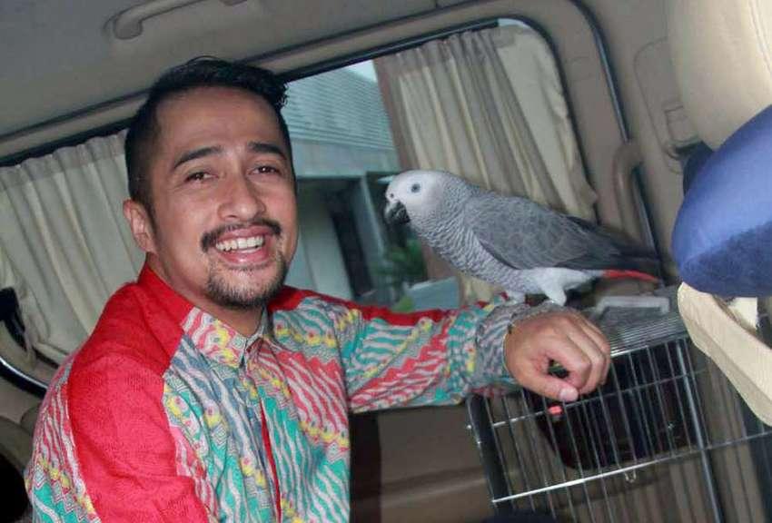 Burung Irfan Hakim (Tribunnews)