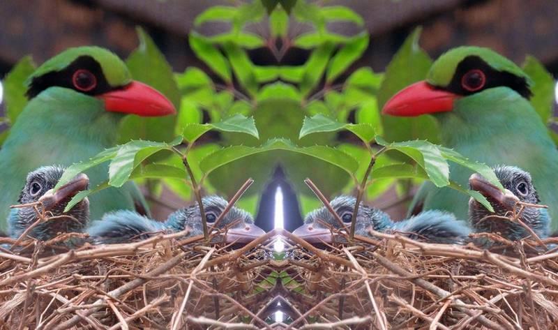 4 Burung Murai Hijau Jawa Terlangka di Dunia Lahir di Inggris