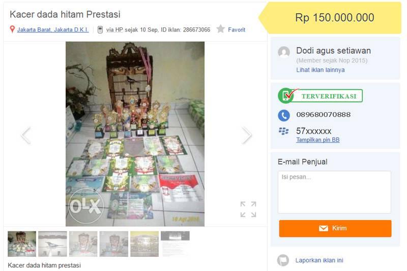 Kacer Dada Hitam Prestasi (OLX.co.id)