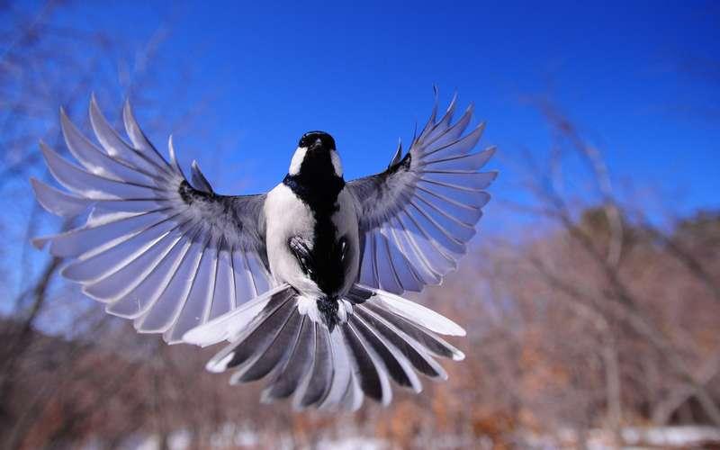14 Cara Mengatasi Burung Salto dalam Hitungan Hari
