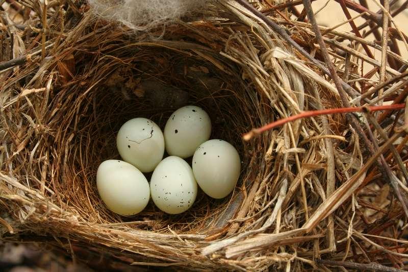 Faktor Utama Penyebab Telur Burung Tidak Menetas