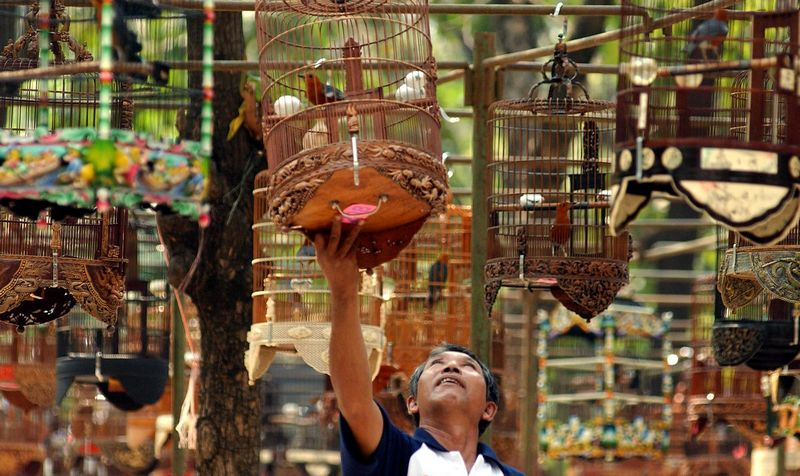Lomba Burung Kicau (eaglenews.ph)