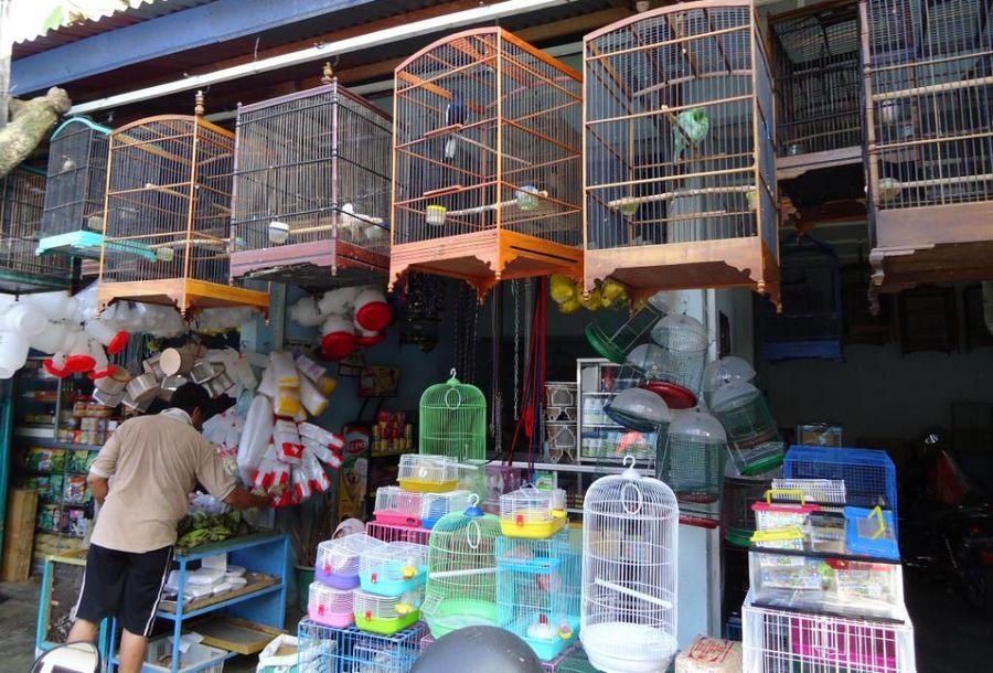 Pasar burung (finchpolis)