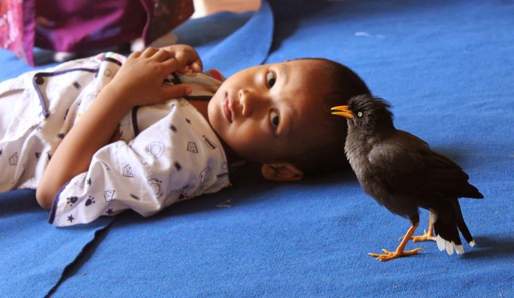 Bulbul menemani Revo istirahat (ida-nurlaila.blogspot.co.id)