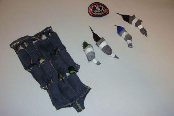 Burung Kolibri dimasukkan kantung (finchwench.wordpress.com)