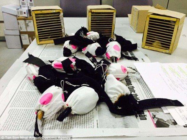 Burung dililit kain (dailymail.co.uk)