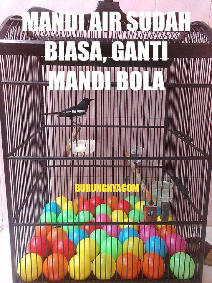Bola warna-warni untuk mengatasi burung turun dari tangkringan (facebook.com/burungnyadotcom)