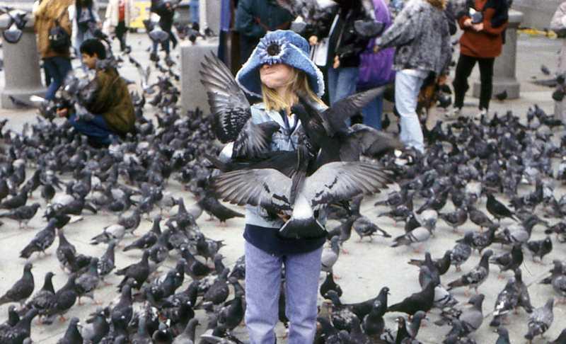 8 Cerita Lucu Burung yang Bikin Kicau Mania Ketawa Ngakak
