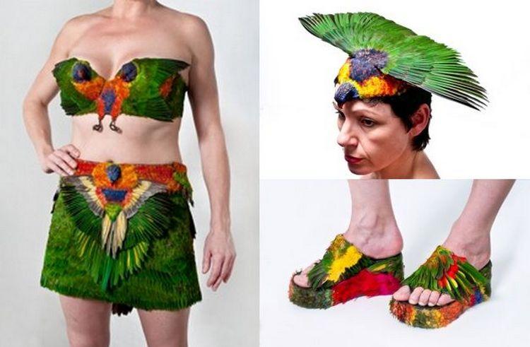 Karya seni dari bangkai burung (www.janetclaytongallery.com.au)