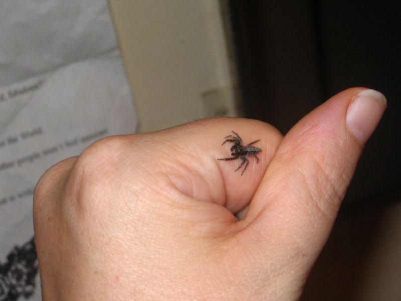 Laba-laba kecil (deviantart.com)