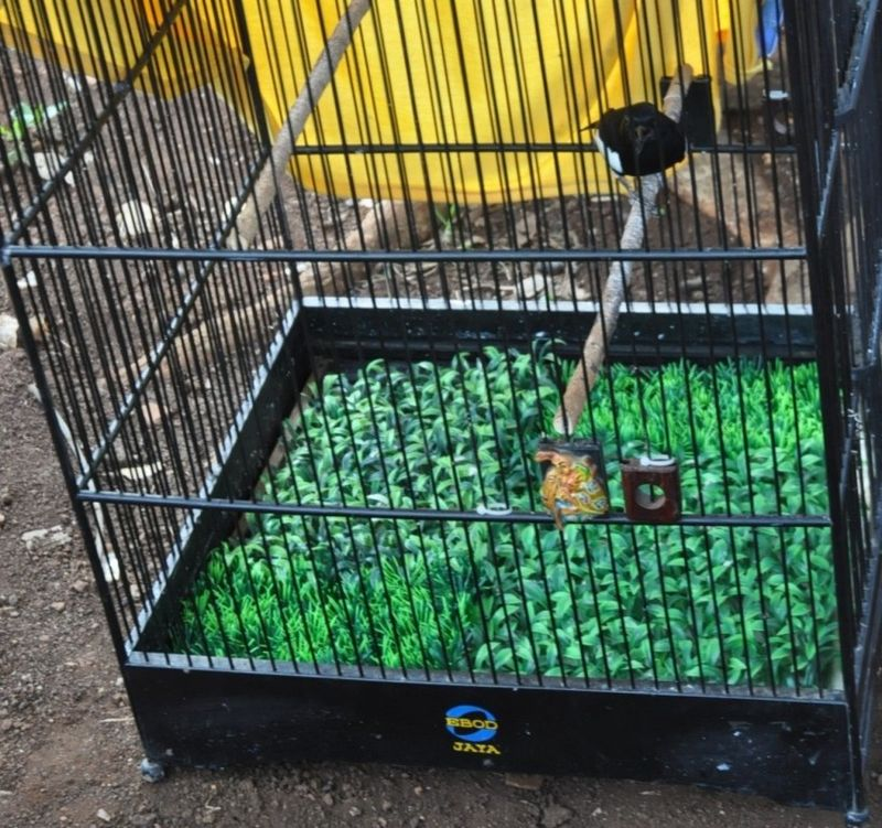 Rumput plastik (mediaronggolawe.com)