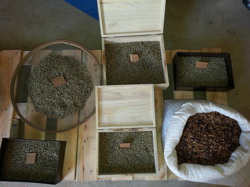 Sekantong biji kopi dari kotoran burung Jacu (modernfarmer.com)