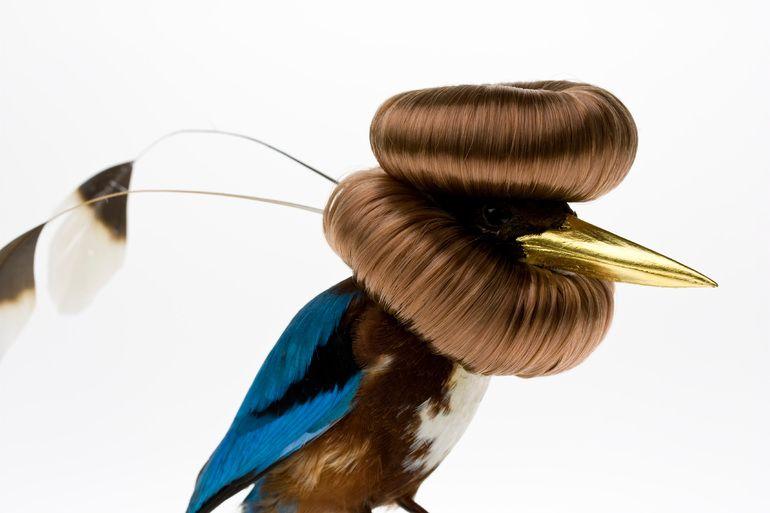 17 Burung Ini Telah Didandani Seniman Biar Kelihatan Cantik