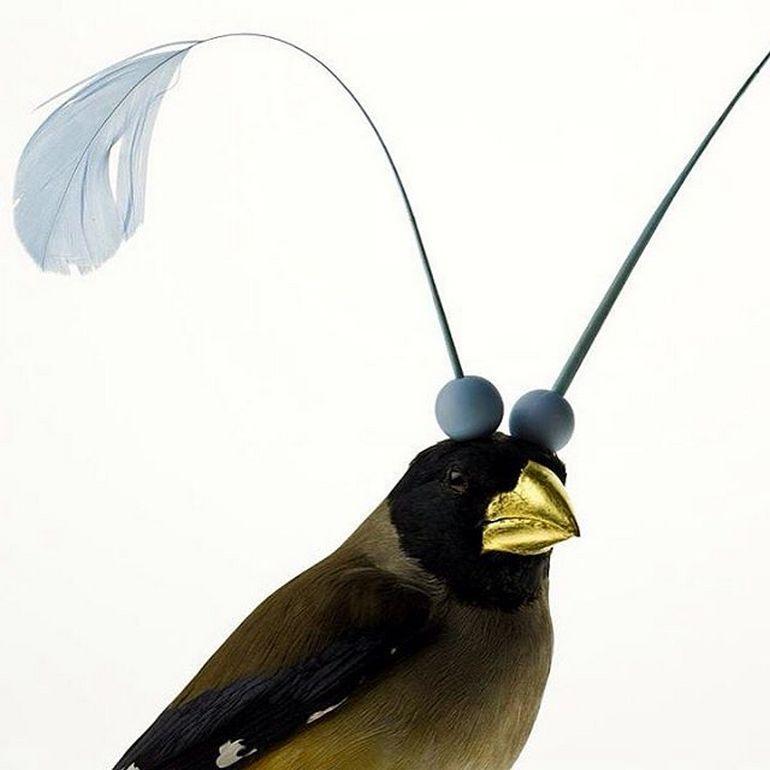 Burung cantik 14 (Karleyfeaver.com)