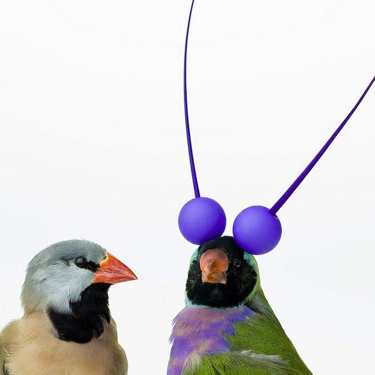 Burung cantik 15 (Karleyfeaver.com)