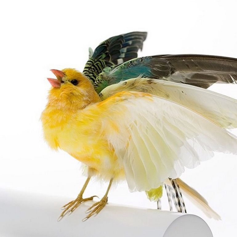 Burung cantik 16 (Karleyfeaver.com)