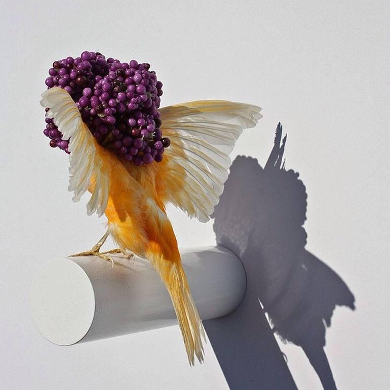 Burung cantik 17 (Karleyfeaver.com)