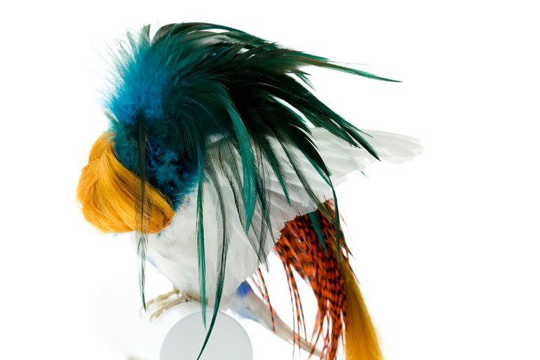 Burung cantik 3 (Karleyfeaver.com)