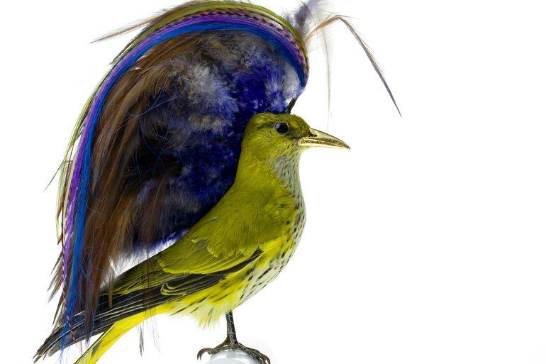Burung cantik 4 (Karleyfeaver.com)