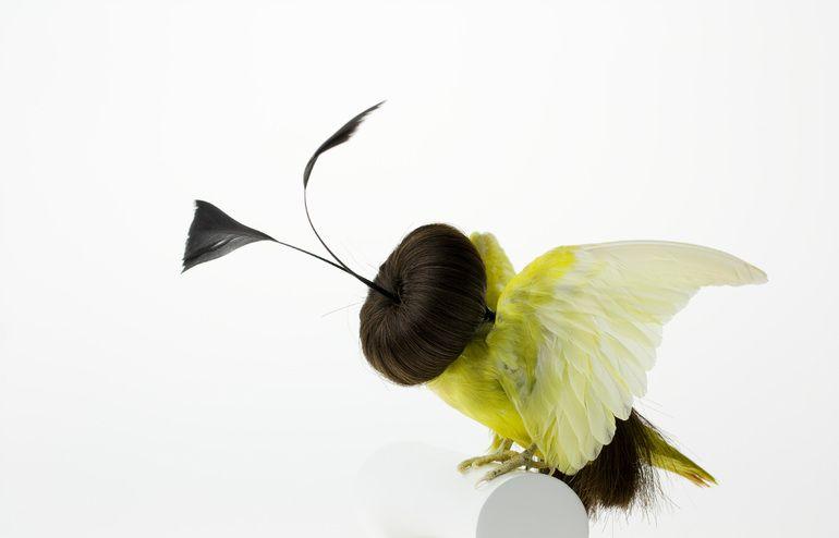 Burung cantik 7 (Karleyfeaver.com)