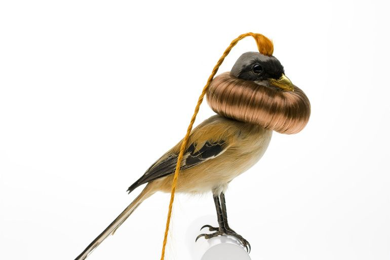 Burung cantik 8 (Karleyfeaver.com)