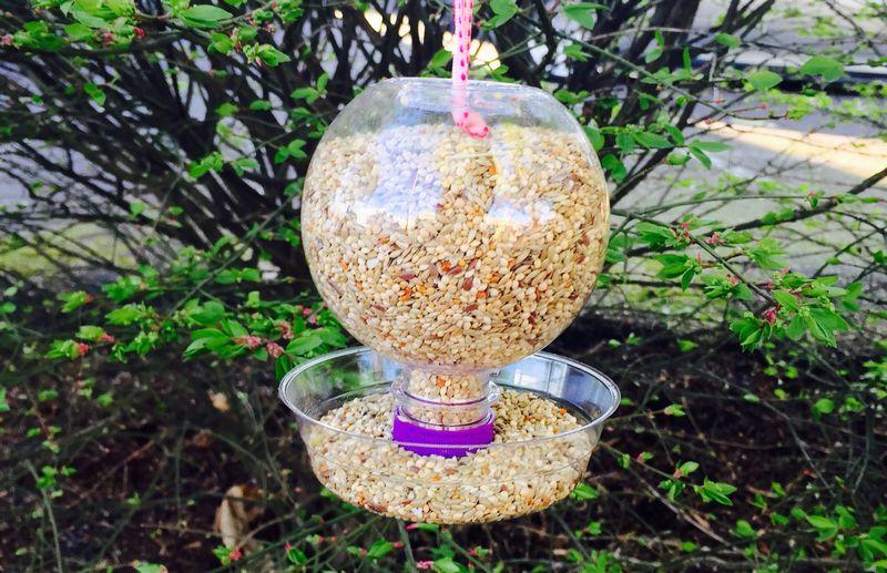 Wadah pakan dan minum burung otomatis (theaquaball.com)