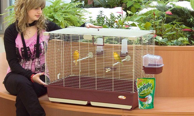 Unik, Begini Cara Menghilangkan Kutu pada Burung Kenari Pakai Sabun Cuci Piring