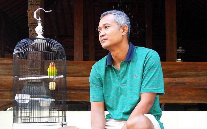 8 Cara Mengatasi Lovebird Telat Ngekek di Lapangan Ala Om Sigit WMP