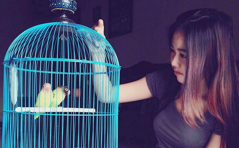 38 Cara Setting Lovebird Jantan Untuk Lomba Biar Ngekek Panjang