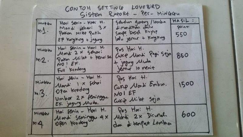 Cara mengetahui setingan Lovebird di lomba melalui penelitian (facebook.com)