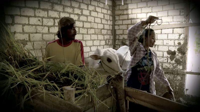 Ibu Pujiyanti jual dua ekor sapi untuk beli Murai Batu (youtube.com)