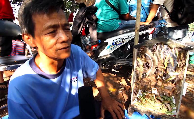 Kisah sukses penjual belalang di lomba burung (youtube.com)