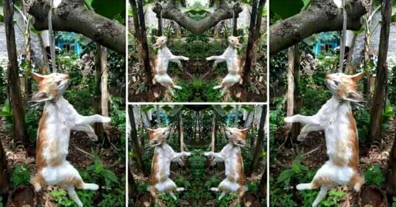 Kucing digantung viral (facebook.com)