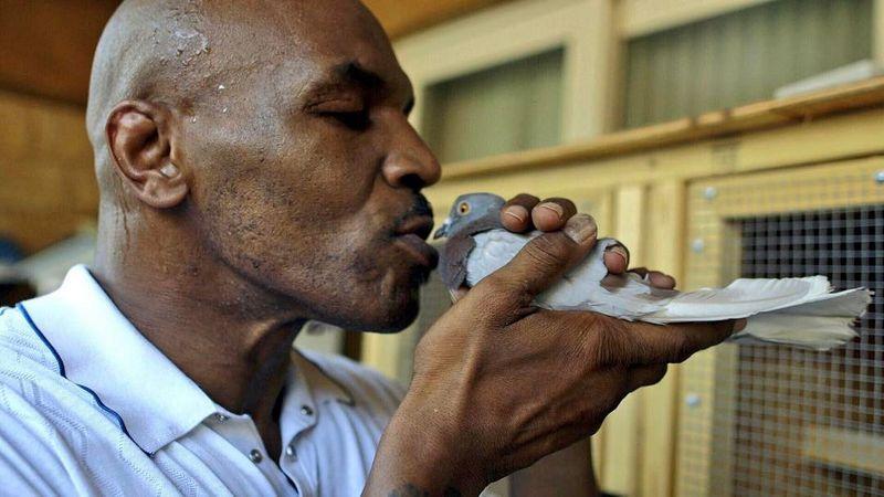 Mike Tyson suka mencium burung Merpati di rumah (instagram.com)