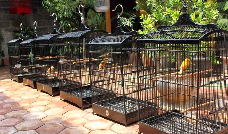 Hоw tо dry а bird іn thе rainy season (oxibird.blogspot.com)