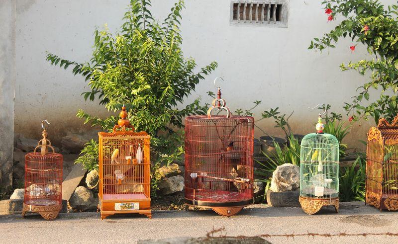 6 Alternatif Menjemur Burung di Musim Hujan