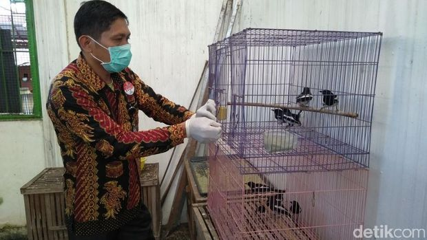 8 Burung Kacer berhasil diselamatkan petugas (detik.com)