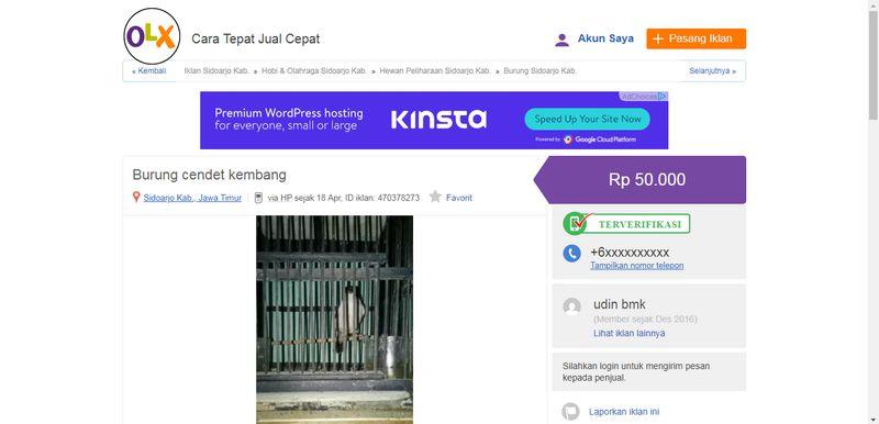 Harga Burung Cendet Kembang (olx.co.id)