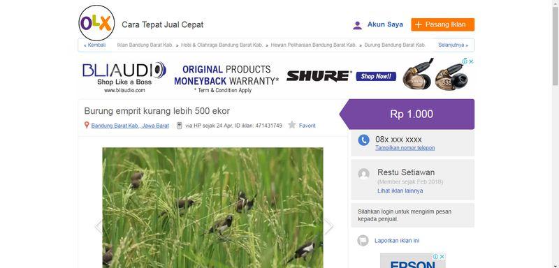 Harga Burung Emprit (olx.co.id)