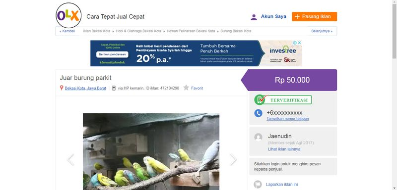 Harga Burung Parkit (olx.co.id)