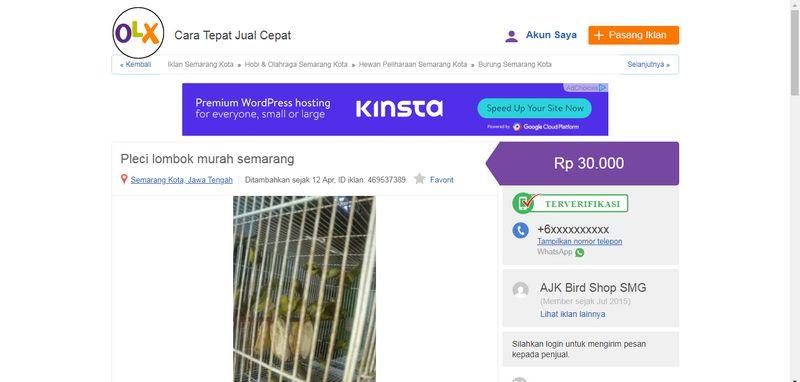 Harga Burung Pleci Lombok (olx.co.id)