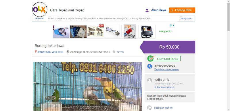 Harga Burung Takur Jawa (olx.co.id)