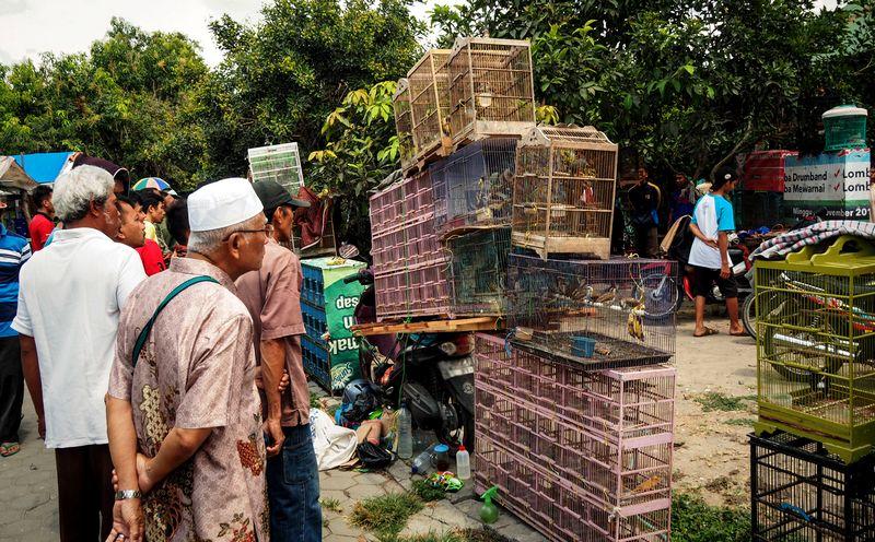 Jenis Burung Termurah di Indonesia (hookedbytheworld.com)