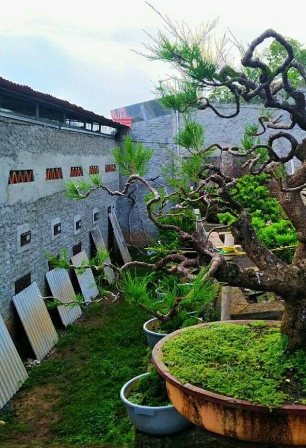 Kandang Murai Batu dan Bonsai (facebook.com)