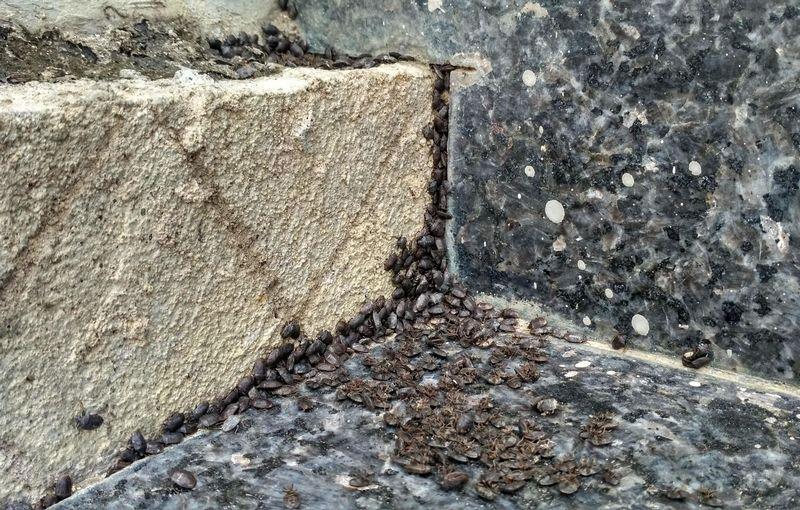 Lembing batu (steemit.com)