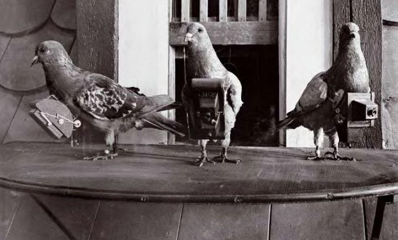 Burung Merpati Bawa Kamera Mini (publicdomainreview.org)